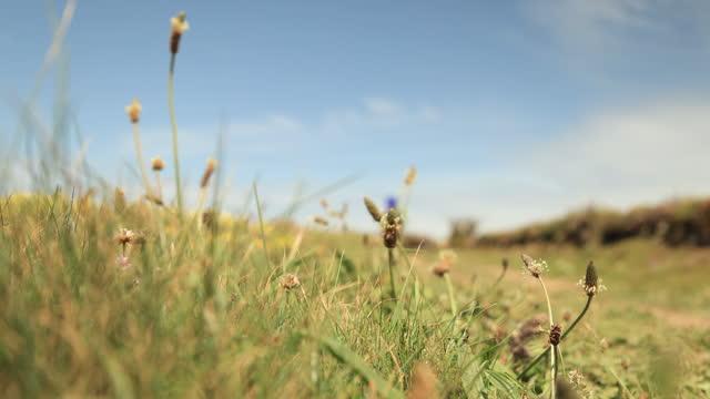 hiking in summer. defocussed. - coastal feature stock videos & royalty-free footage