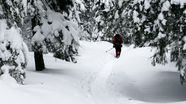 Hiking in winter forest
