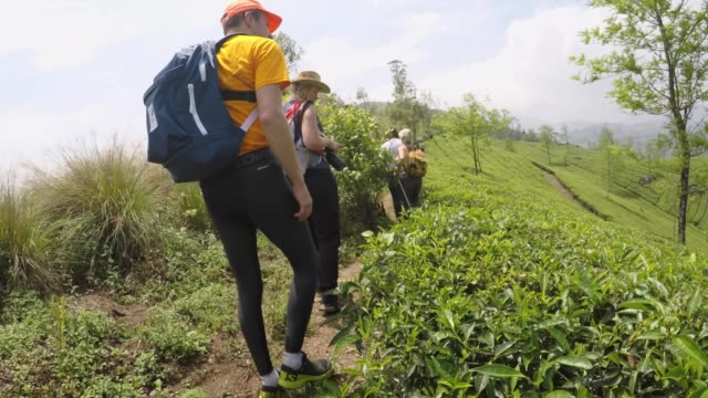 hiking through tea plantations - challenge stock videos & royalty-free footage
