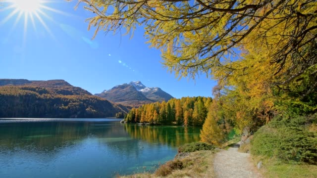 hiking trail on lake silsersee with larch trees and sun in autumn, engadin, grisons, switzerland, european alps - footpath stock videos & royalty-free footage