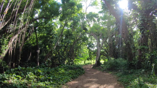 vidéos et rushes de pov hiking view of sun, trees and forest near honolua bay in maui, hawaii. - time-lapse - route de campagne