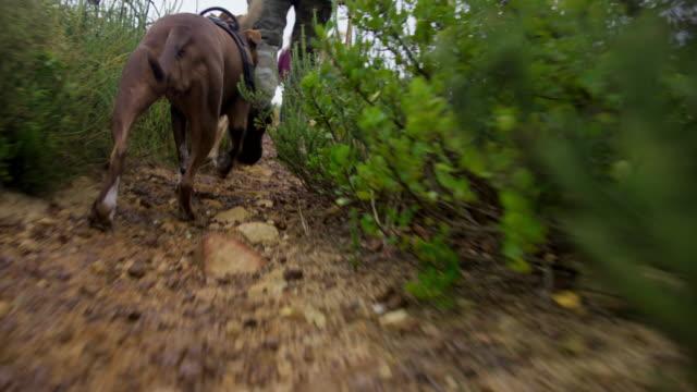 hiking with dogs - kleine gruppe von tieren stock-videos und b-roll-filmmaterial