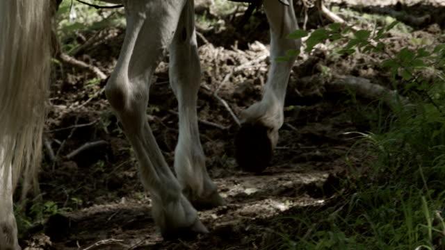 Wandelen met paard. Bergachtig landschap