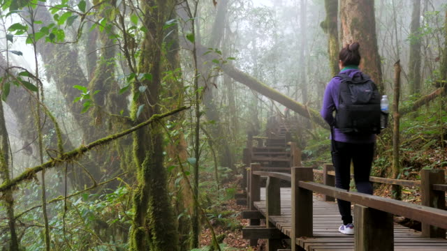 Hiking woman trekking in rainforest jungle