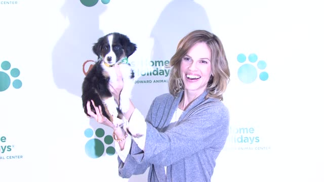 hilary swank at the hilary swank and iams home 4 the holidays raise awareness for pet adoption at new york ny - hilary swank stock videos & royalty-free footage