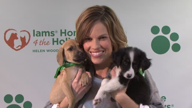 hilary swank at the hilary swank and iams home 4 the holidays raise awareness for pet adoption at new york ny. - adoption stock videos & royalty-free footage