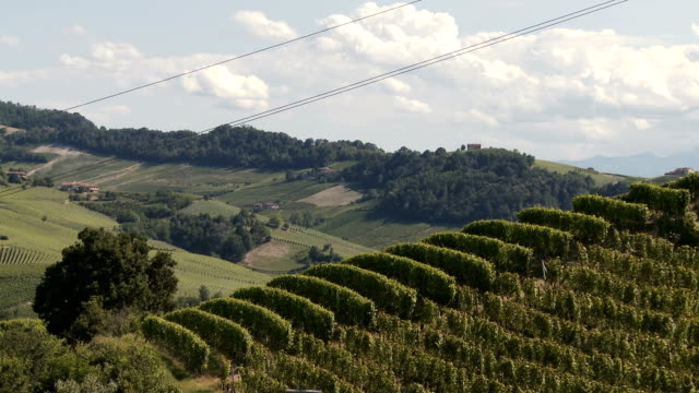 hill covered by green vineyards rows pan in summer on a sunny day day - piemonte video stock e b–roll