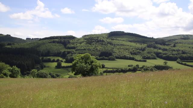 vidéos et rushes de hill, forest in the morvan - hill