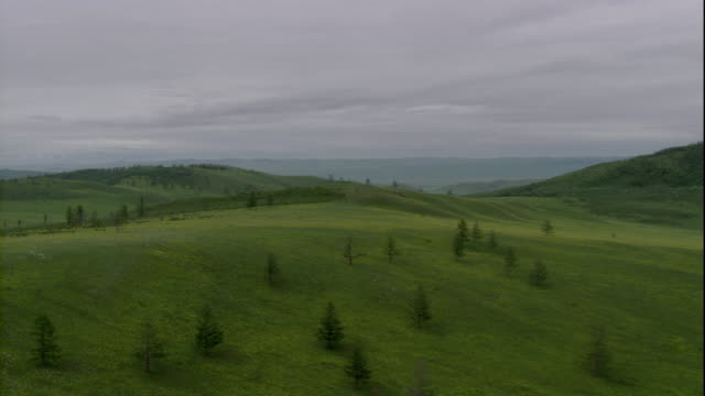 hills and trees cover the steppes in mongolia. available in hd. - mongolei stock-videos und b-roll-filmmaterial