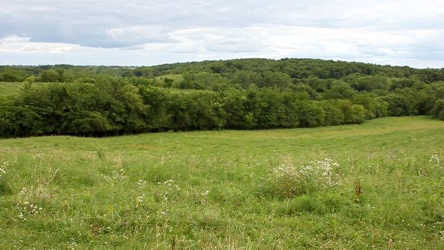 hills and trees in the country - treelined stock videos & royalty-free footage