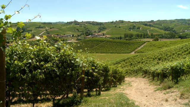 hills covered by green vineyards in summer in the langhe, italy - piemonte video stock e b–roll