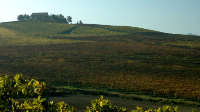 hills covered by vineyards in autumn in piedmont, italy - plant attribute stock videos and b-roll footage