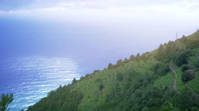 イタリアのブドウ畑での丘