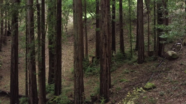 hillside forest outside san jose, california - nordkalifornien stock-videos und b-roll-filmmaterial