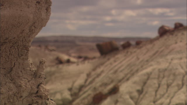 a hillside in petrified forest national park is strewn with logs of petrified wood. - geology stock videos & royalty-free footage