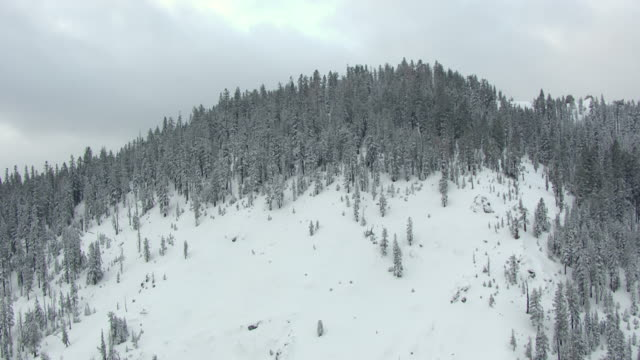 ws aerial pov hilltop in snow covered pine forest in northern sierra nevada, sky with dark clouds in background / california, united states - カリフォルニアシエラネバダ点の映像素材/bロール