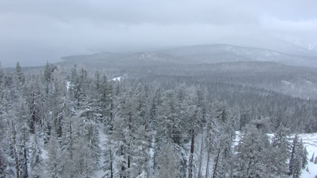 WS AERIAL POV Hilltop in snow covered pine forest in northern Sierra Nevada, sky with dark clouds in background / California, United States