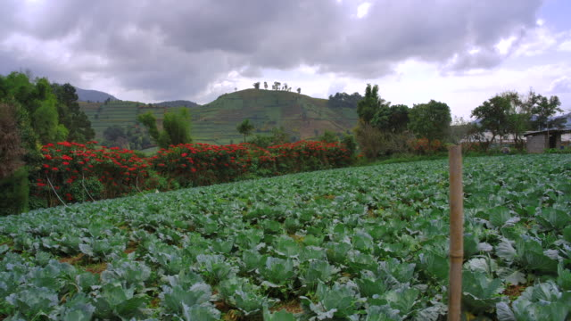 hilltribes in the highlands grow vegetables and agriculture. - crucifers video stock e b–roll