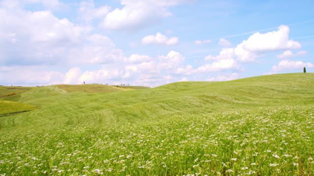 ds 丘陵 meadow フルに風に揺れる花々のくつろぎ - 広角撮影点の映像素材/bロール