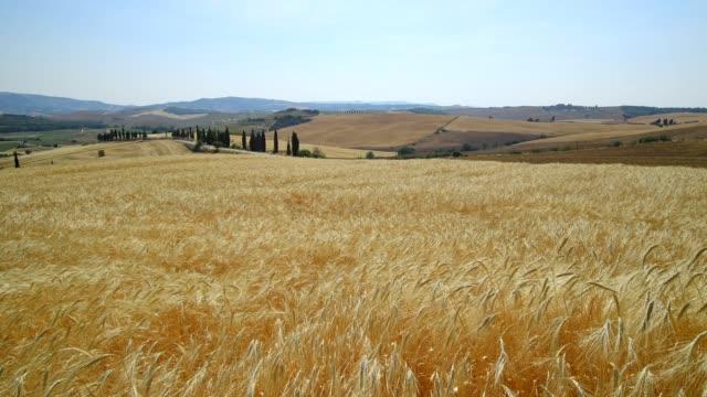 vídeos y material grabado en eventos de stock de hilly tuscan countryside with wheat fields in summer, pienza, val d'orcia, siena province, tuscany, italy - trigo