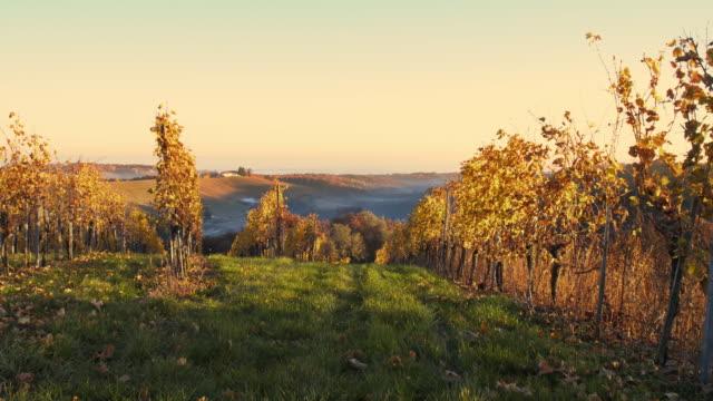hilly vineyard - prekmurje stock videos & royalty-free footage