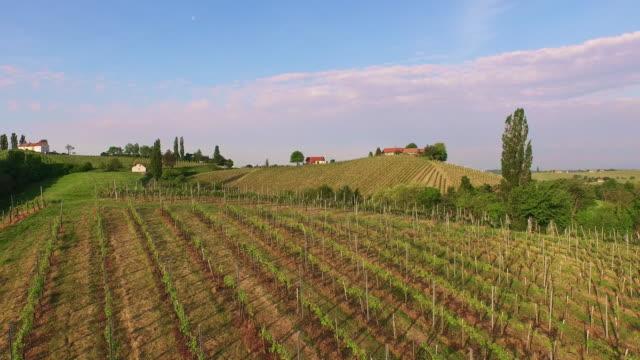 vidéos et rushes de vue aérienne du paysage rural collines de vignobles et de - cîme d'un arbre