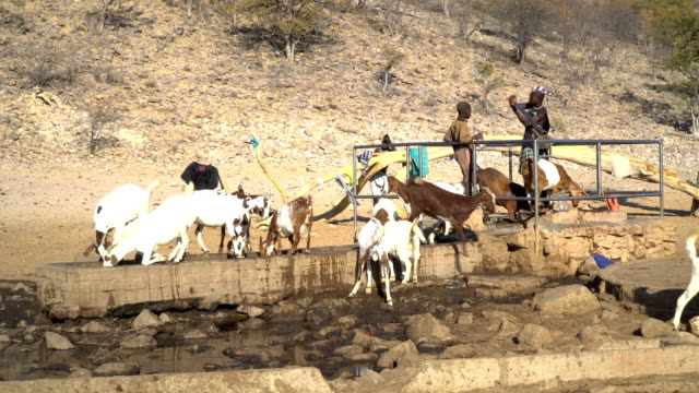 Himba tribe, Namibia- Boys draw water for the goats
