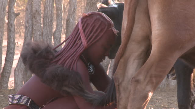 himba tribe woman milking cattle: traditional female role, namibia - stereotypical stock videos & royalty-free footage