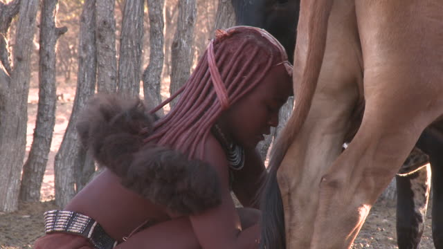 himba tribe woman milking cattle: traditional female role, namibia - gender stereotypes stock videos and b-roll footage