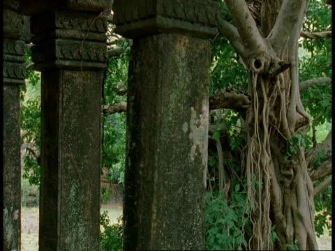 cu hindu temple pillars, jungle, bandhavgarh national park, india - bandhavgarh national park stock videos and b-roll footage