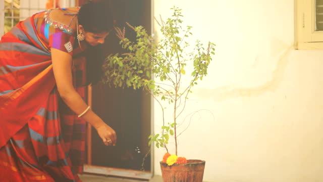 Hindu Woman Worships Basil Plant