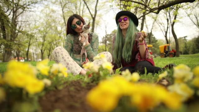 vídeos de stock, filmes e b-roll de namoradas de hippie e um cão relaxante no gramado - cabelo verde