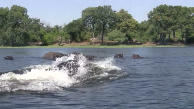 hippo suddenly comes up from under boat - hippopotamus stock videos & royalty-free footage