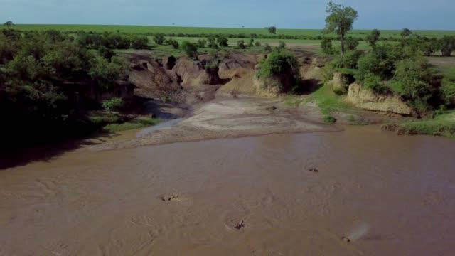 Hippopotamuses In Talek River, Maasai Mara, Kenya, Africa