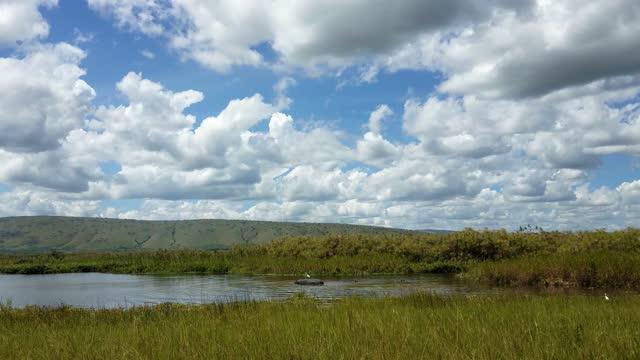 hippos at the safari, rwanda - national park stock videos & royalty-free footage