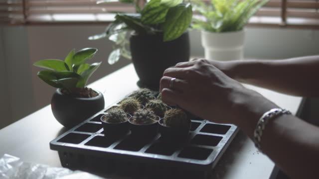 ヒップスターアジアの男自宅で水をやる屋内家植物 - 多肉植物点の映像素材/bロール