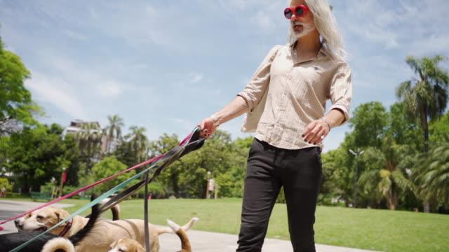 hipster-mann und hunde auf einem spaziergang - haustierleine stock-videos und b-roll-filmmaterial