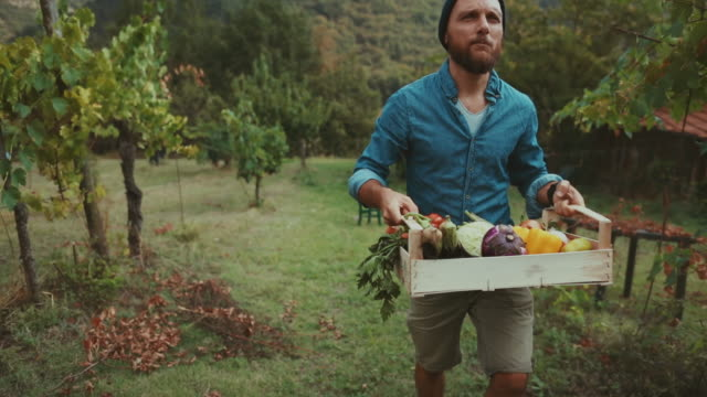 hipster man with grocery box - lavoratore agricolo video stock e b–roll