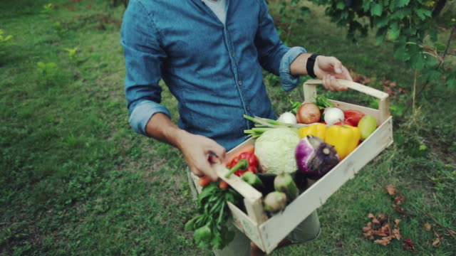 vídeos de stock e filmes b-roll de hipster man with grocery box - legumes