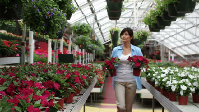 hispanic woman in greenhouse carrying plants - garden centre stock videos & royalty-free footage