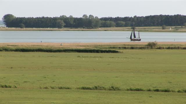 ws historic boat flowing at inner coast of baltic sea / ahrenshoop, mecklenburg-western pomerania, germany - medium group of animals stock videos & royalty-free footage