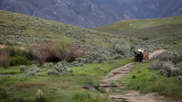 historic wagon on rural dirt road - cart stock videos & royalty-free footage