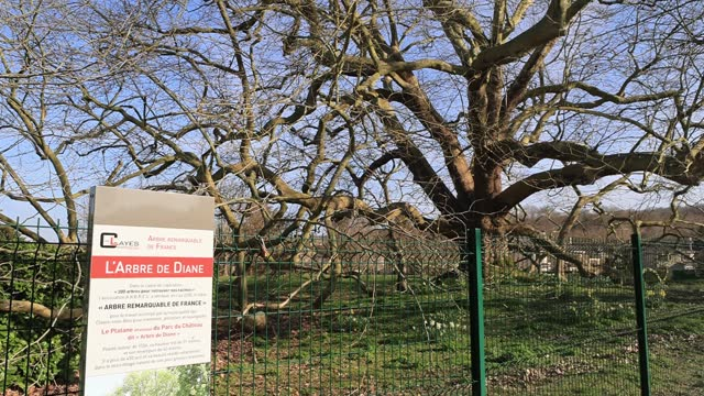 """historical information panel next to a plane tree named """"arbre de diane"""" which is classified as """"arbre remarquable de france"""" on march 23 in les... - durability stock videos & royalty-free footage"""