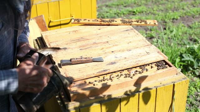 vídeos de stock, filmes e b-roll de hive. - grupo mediano de animales