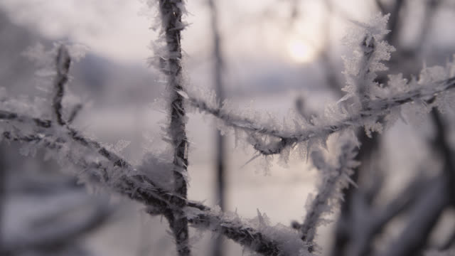 hoar frost on tree branches at sunrise, alaska, usa - kristalle stock-videos und b-roll-filmmaterial