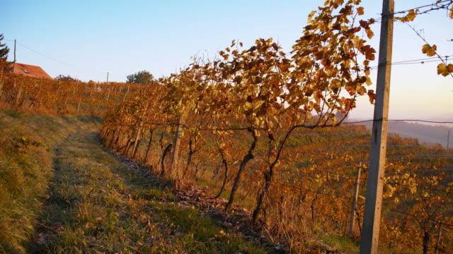 hoarfrost in the vineyard - prekmurje stock videos & royalty-free footage