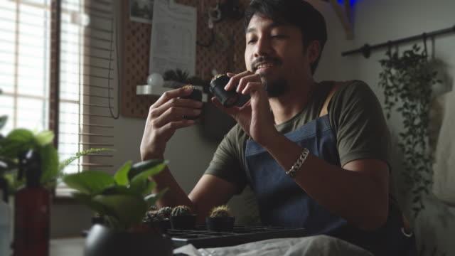 vidéos et rushes de hobby at home : l'homme fleuriste ensemence les plantes et s'occupant de ses plantes d'intérieur - plant