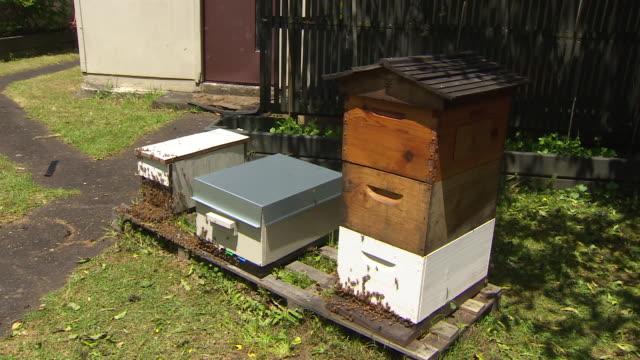Hobbyist beehives in residential garden New Zealand