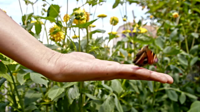 SLO MO Hodling a butterfly on the hand
