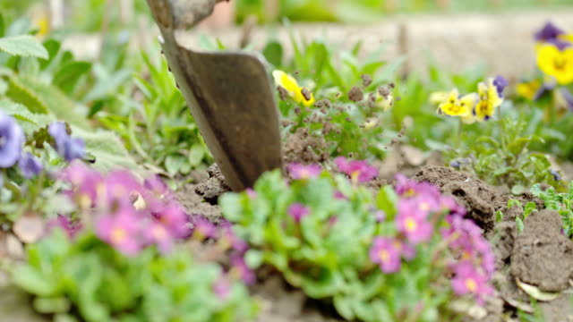 slo mo hoeing the soil in flower garden - planting stock videos and b-roll footage